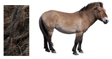 horse_hair