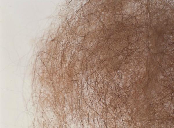キャメルの毛