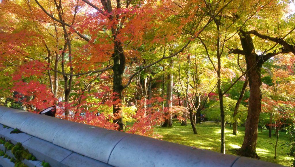 IWATA 京都本店 「人類進化ベッド」オープニングイベントのご報告