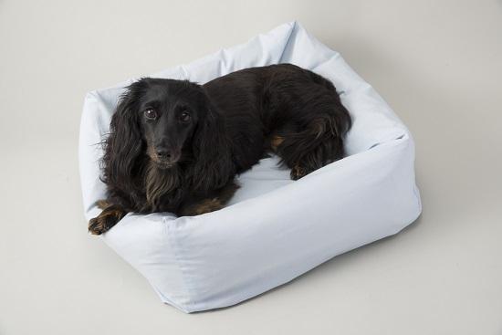 ペット用フェザーベッド