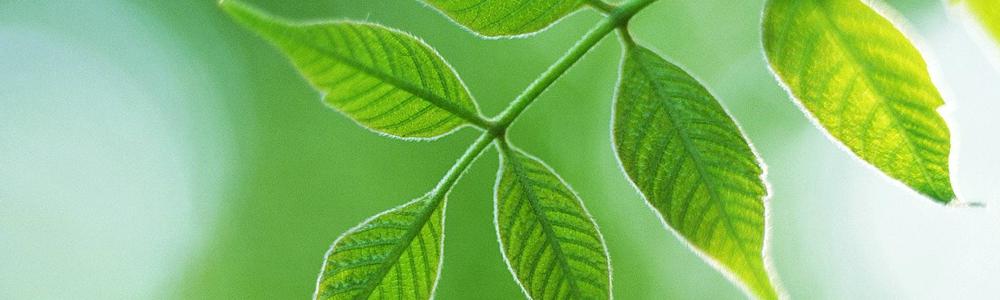 社会・環境への取り組み(CSR)