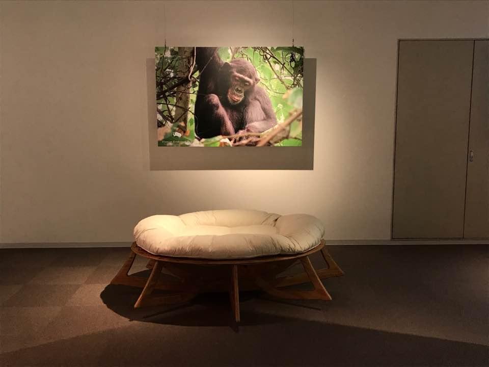人類進化ベッドの展示風景
